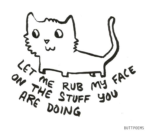 said every cat ever.