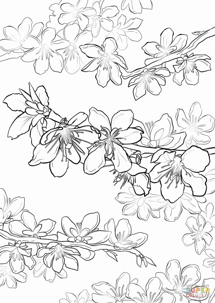 15++ Cherry blossom colouring pages info