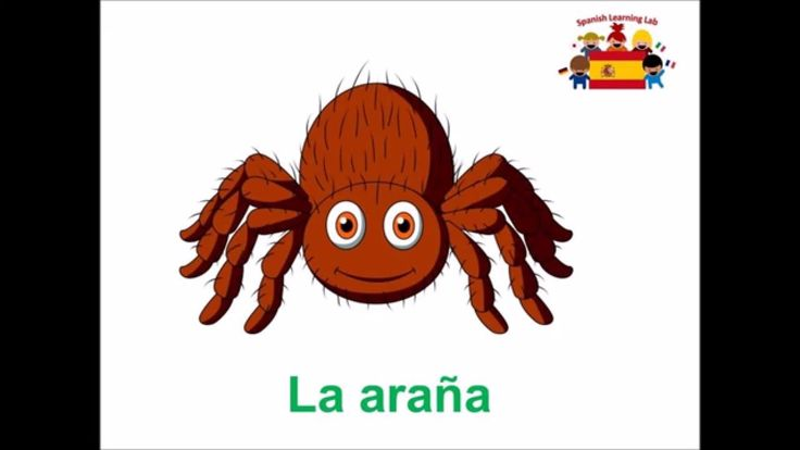 Los insectos - learn to name Mini Beasts in Spanish