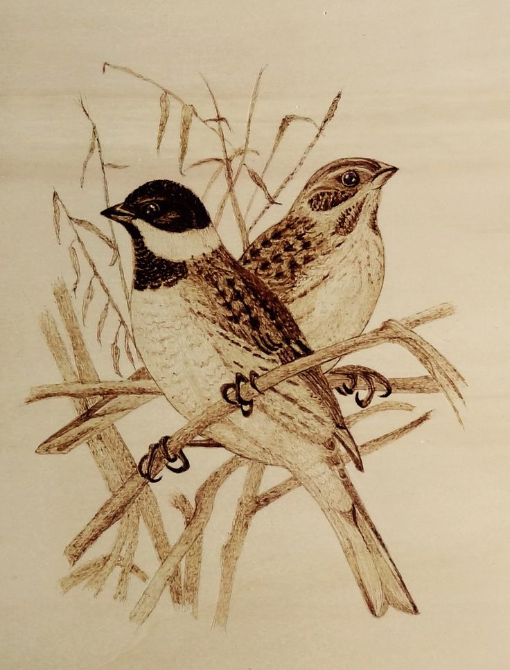 Pyrography, woodburning,  L.B
