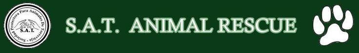 SAT, Sociedad Protectora para Animales de Torrevieja, Costa Blanca, Spain