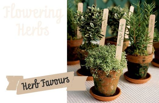 Herb wedding favours in mini terra-cotta pots with guest names. Great for garden theme, summer theme, kitchen theme, rustic theme, include a few lavender pots and it's great for a lavender theme, too.
