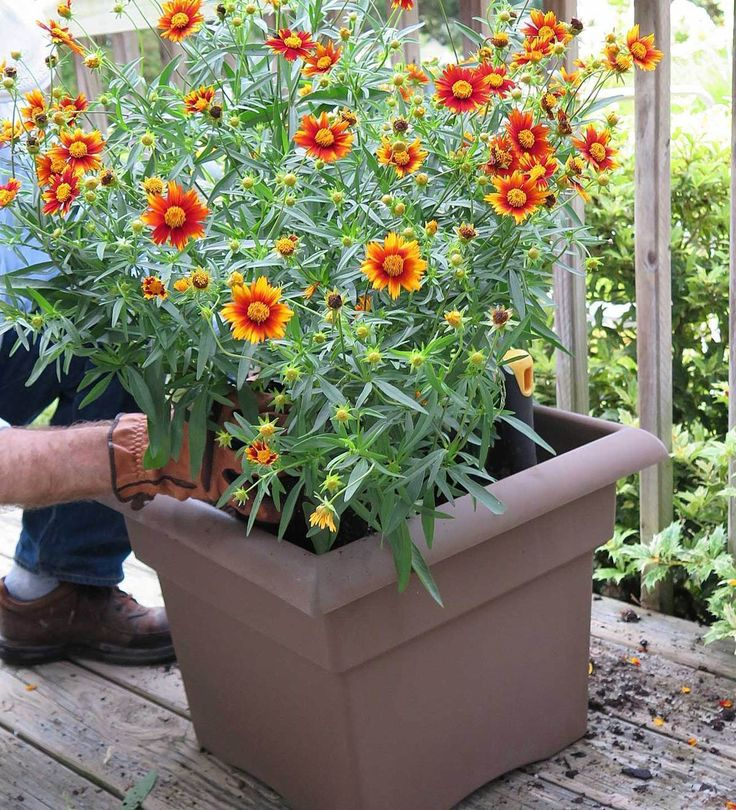 This fall DIY project will have you potting flowers in no time! It's great for gardeners who don't have a yard, or those that are simply looking to dress up their balconies. Click-in for our full tutorial.
