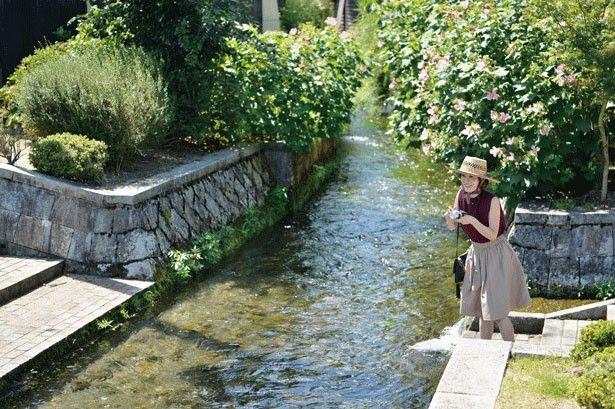 湧き水を生活用水として使う、昔ながらの暮らしを今も続ける針江で、古き良き時代の日本を再発見。水と共に暮らす、日本の原風景…