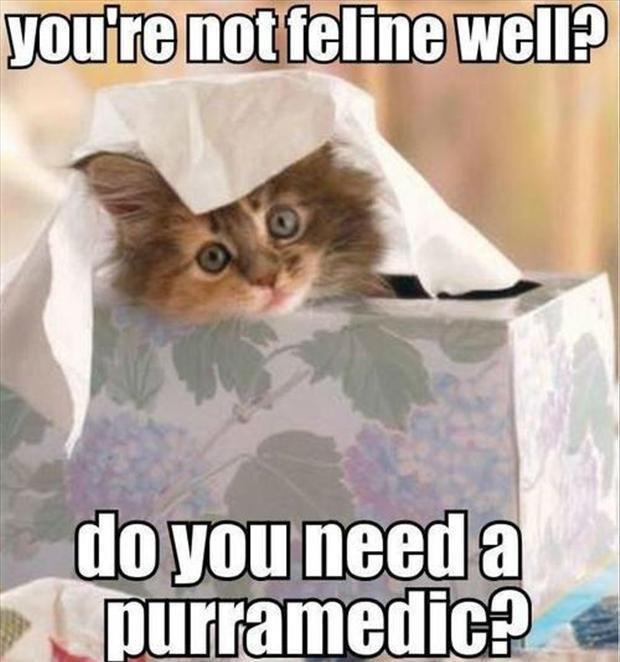 Pun Intended Cat Puns Kid Friendly Memes Feel Better Funny