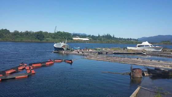 City and community partners clean up Campbell River estuary :: Before photo