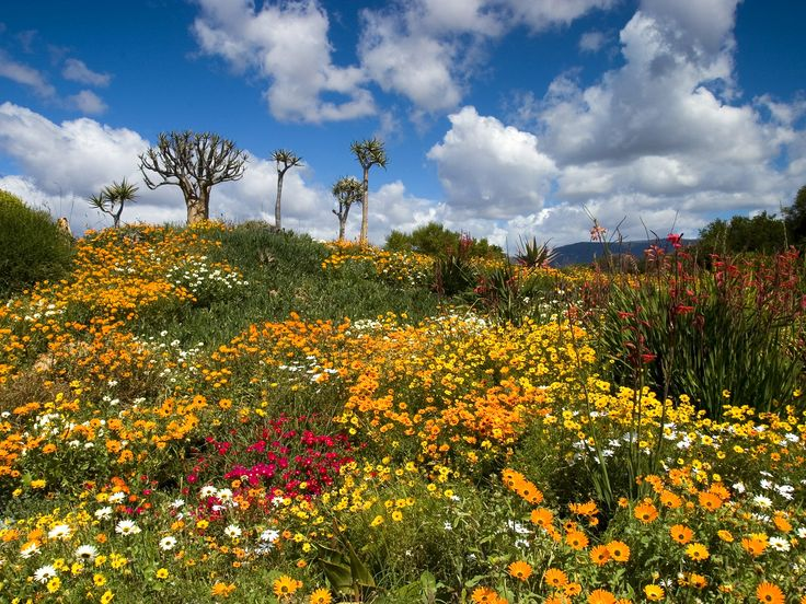 West Coast National Park, Langebaan, South Africa