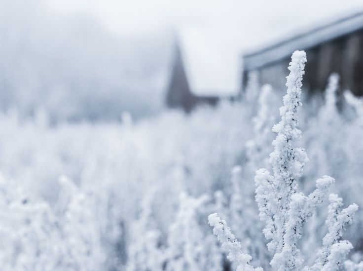 Die schönsten Winterblumen #News #Pflanzen