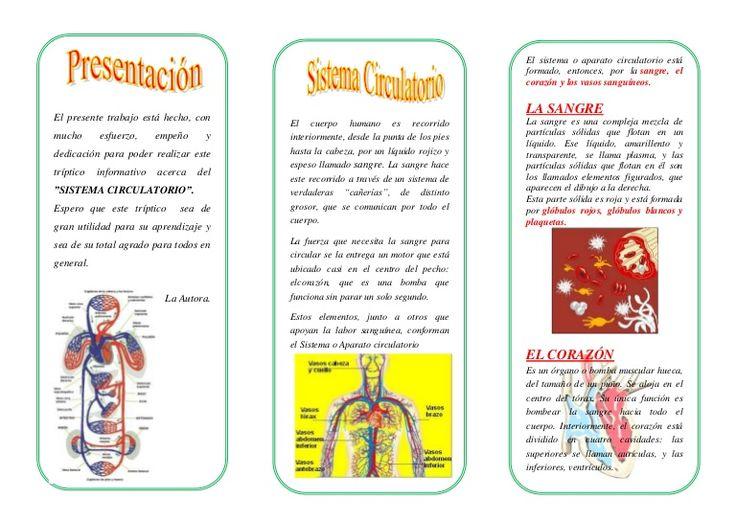 El sistema o aparato circulatorio está formado, entonces, por la sangre, el corazón y los vasos sanguíneos. El presente trabajo está hecho, con mucho esfuerzo,…