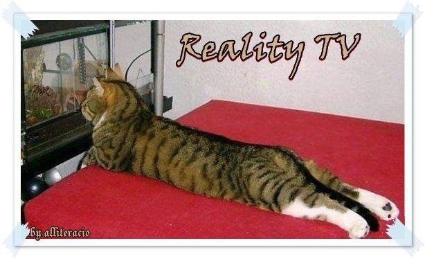 cica tévét néz