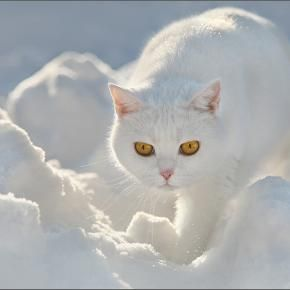 Cat treading lightly / He goes by way of the clouds / Cat treads light on clouds