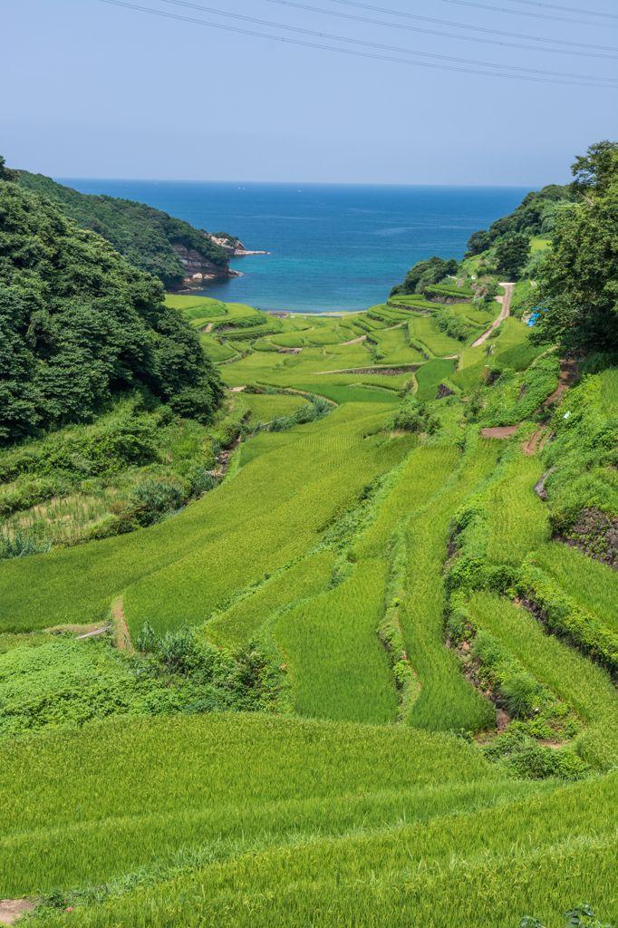 Terraced Rice Fields in Saga, Japan 浜野浦の棚田