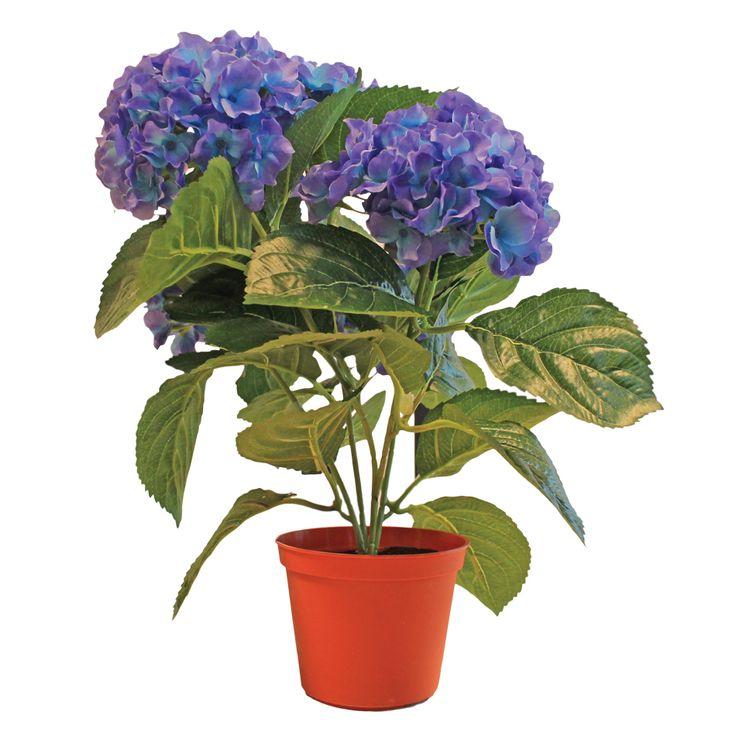 Hortensia  Description: Met vijf volle koninklijk blauwe bloemen. Oogstrelend mooi. Hoogte ca. 40 cm.  Price: 19.99  Meer informatie