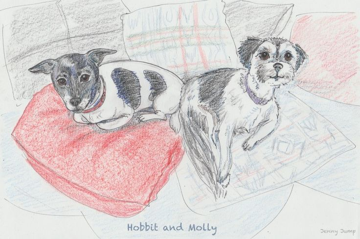 Hobbit and Molly, pet portrait, pencil drawing, pen and Prismacolours, Jenny Jump