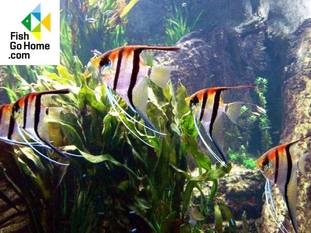 17 best images about lost ocean on pinterest coloring for Skalar aquarium