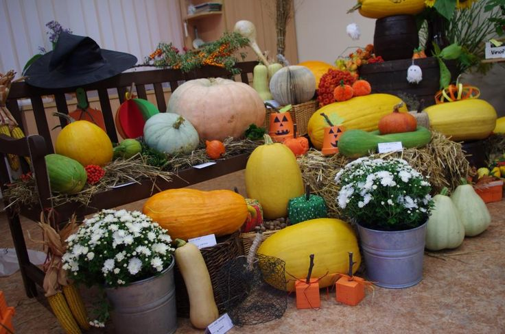 Podzimní výstava 2014 - Výstavu pořádají zahrádkáři Vinoř - Bohdanečkská od 10. do 13. září v informačním centru Na Rychtě (Chaltická 539 Vinoř) ( DIY, Hobby, Crafts, Homemade, Handmade, Creative, Ideas)
