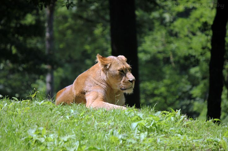https://flic.kr/p/qPdWLB   Longleat Zoo   July 2013