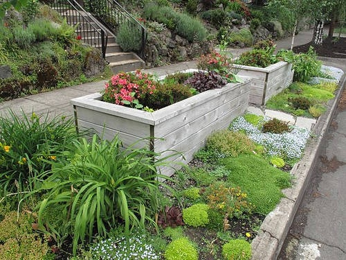 20 best images about sidewalk garden on pinterest front for Low growing plants for flower beds