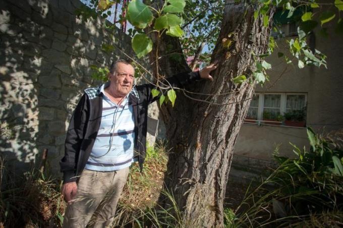 Stanari ulice pored Parka mladeži: Žužul nam je premazao stabla da navijači ne mogu gledati Hajduka! > Slobodna Dalmacija - Mobilni Portal > Slobodna Dalmacija - Mobilni Portal - Novosti