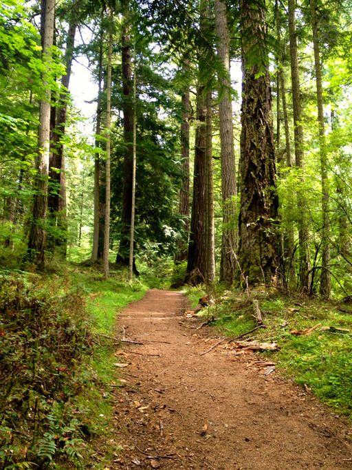 Bela trilha no Parque Estadual Moran, ilha Orcas, do arquipélago das ilhas San Juan, Washington, USA.