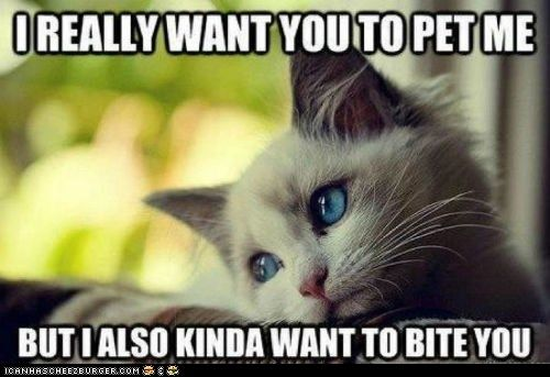 Of course you do...: Cats, Animals, Stuff, Pet, Cat Problem, Funny, Kitty