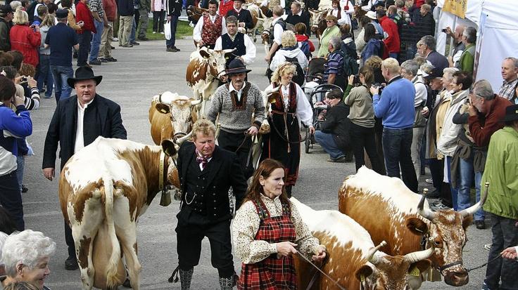 Seljord, Norway: Dyrsku'n fylles med folk og fe.