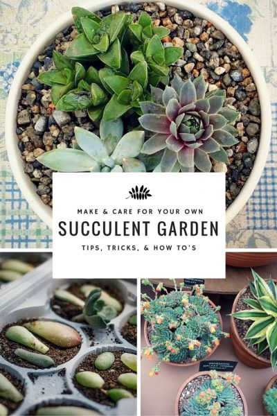 Learn how to care for a succulent garden.