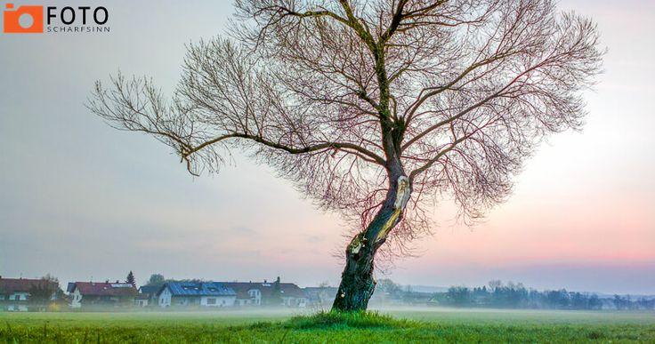 Scharfsinn Baum - Foto Scharfsinn - Baum - #scharfsinn,#foto,#baum,#natur,#sonnenaufgang - http://foto.scharfsinn.net/2016/05/scharfsinn-baum-foto-scharfsinn-baum-httpfoto-scharfsinn-net-scharfsinnfotobaumnatursonnenaufgang/