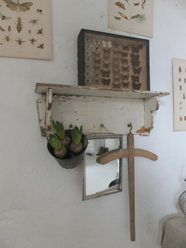 Distressed livingroom shelf with coat hooks, display / shadow box with bug collection