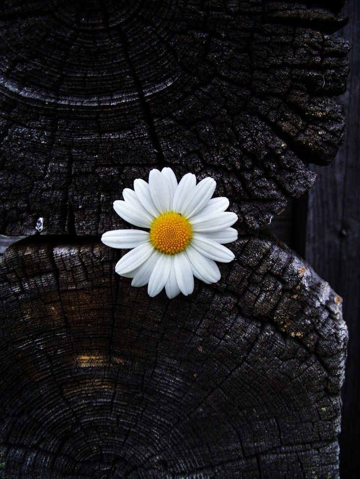 This picture would be so dark and dreary without this one little daisy :)