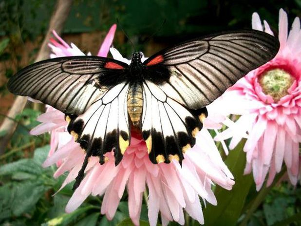45 Remarkable Examples of Butterfly Photography | The Inspiration Blog... For my husband... Never forget