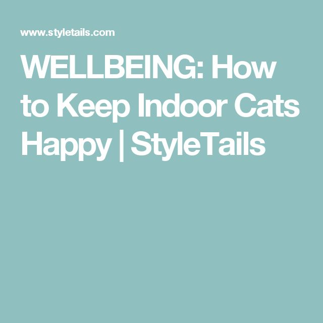 WELLBEING: How to Keep Indoor Cats Happy | StyleTails