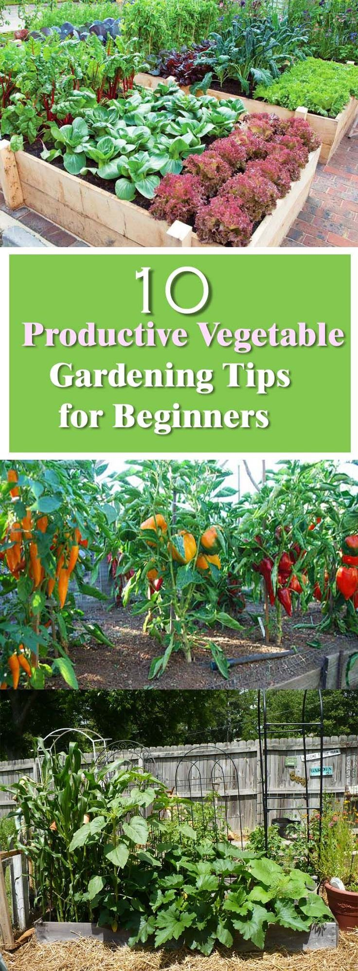 See These Effective Vegetable Gardening Tips For Beginners. The Secret To  Productive Garden Lies In