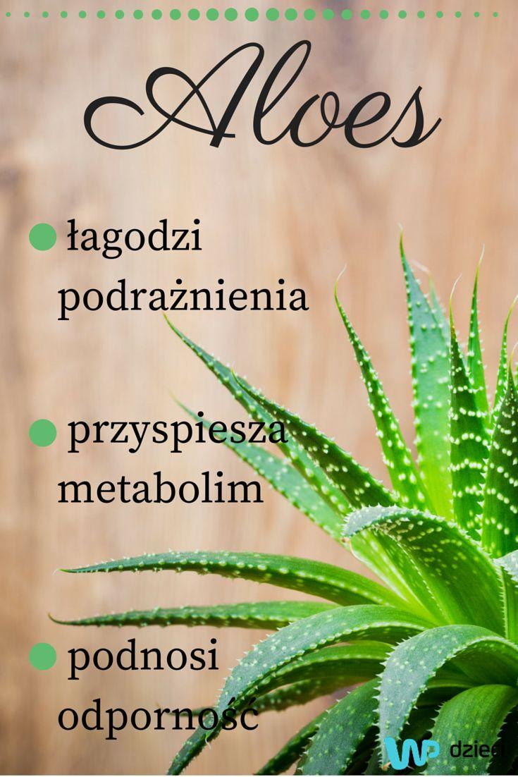 Aloes - zdrowie w doniczce #aloes #aloevera #plant #beauty #takingcareofbeauty #skin #care #cosmetics #biocosmetics #ecocosmetics #sensitiveskin #kosmetyki #skóra #pielęgnacja #skórawrażliwa #biokosmetyki #ekokosmetyki