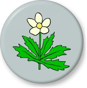 Anemone canadensis vector - Button Badge - Brooch - Gift