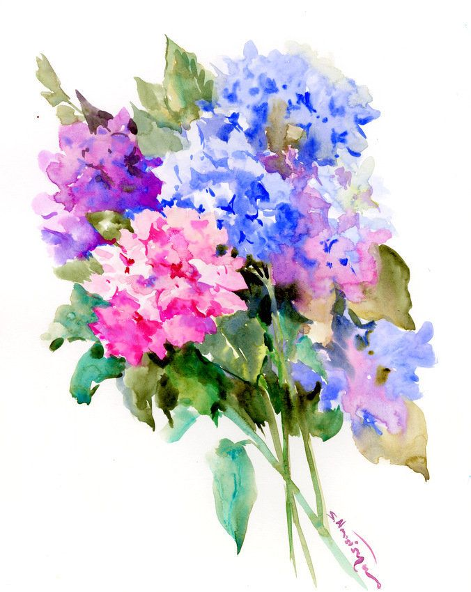 Hydrangea Flowers Original Watercolor Painting Royal Blue Pink Sky Blue Floral Wall Art Watercolor Flowers Hydrangea Artwork Original Watercolor Painting