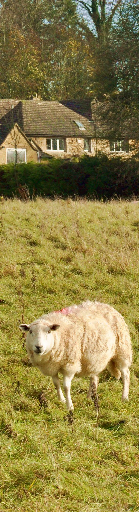 【H.I.S.】【Cotswolds】のどかなイギリスの田舎風景。 #travel
