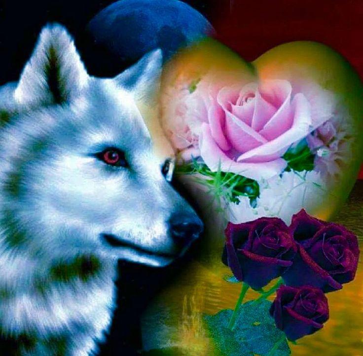 Фото волка с розой