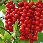 Seis tipos de plantas funcionam como repelentes naturais de insetos                                                                                                                                                                                 Mais