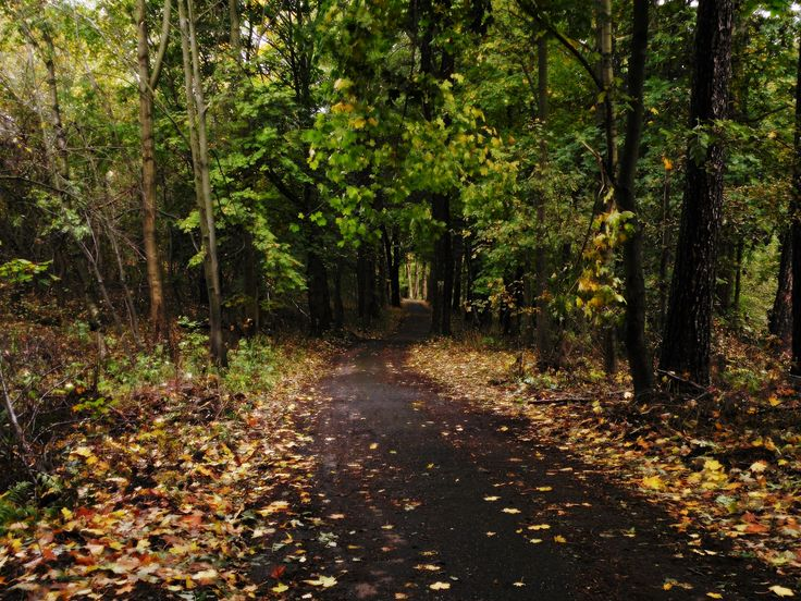 Nine shots of autumn... photo no.2