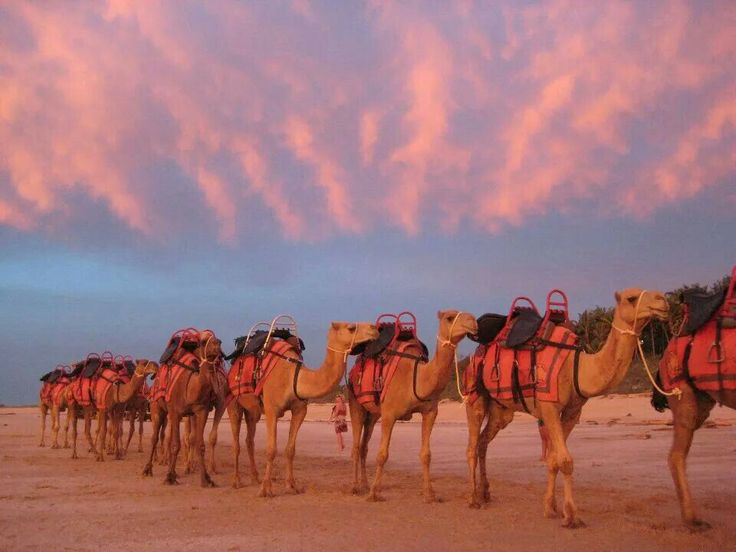 End of the day #sunset #broome #redsuncamels