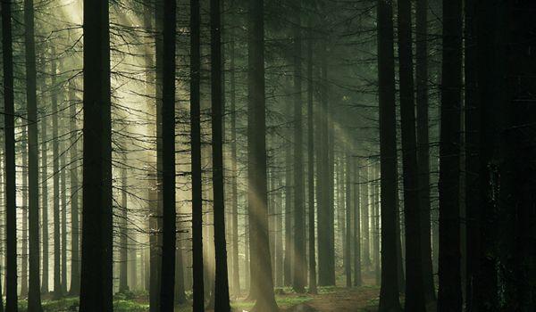 Baciu Forest