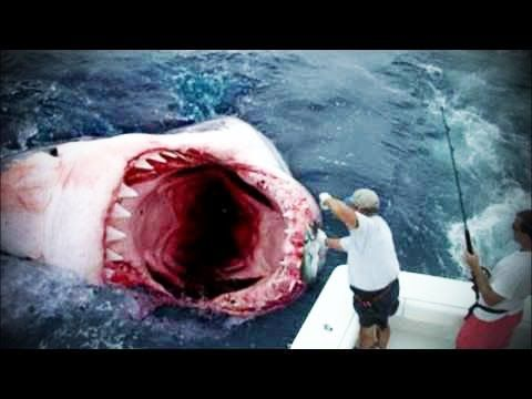 Megalodon Shark Caught on Tape 2014 -December Official Cryptid Research Epic Video! - YouTube
