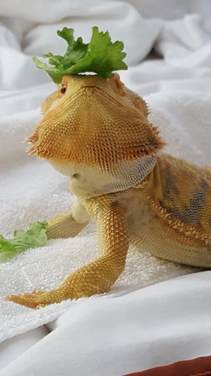 344 best reptiles u0026 amphibians images on pinterest amphibians