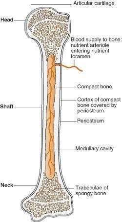 veterinary online- bones