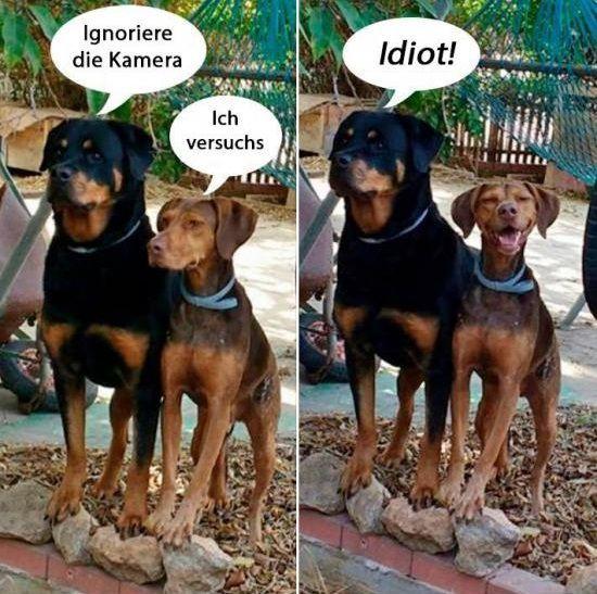 Man kann eine Kamera nicht ignorieren selbst als Hund nicht