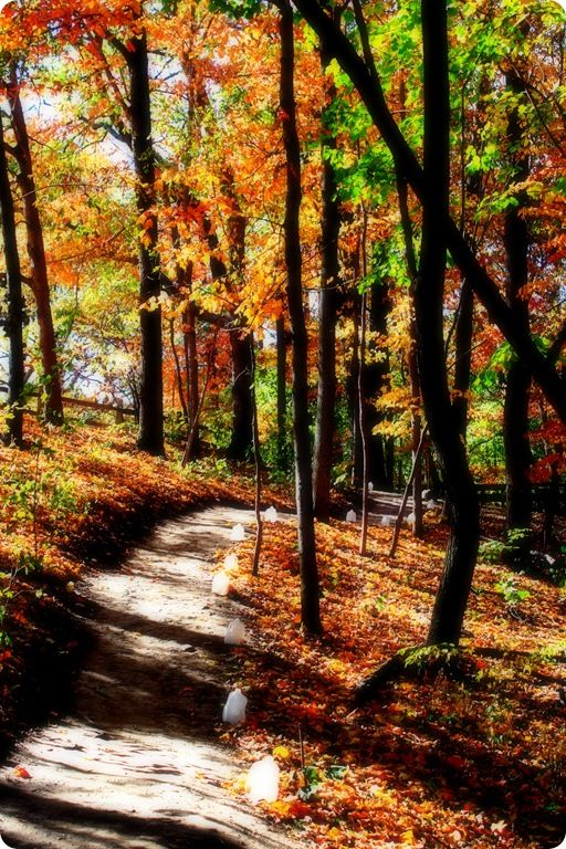 Autumn, my favorite.