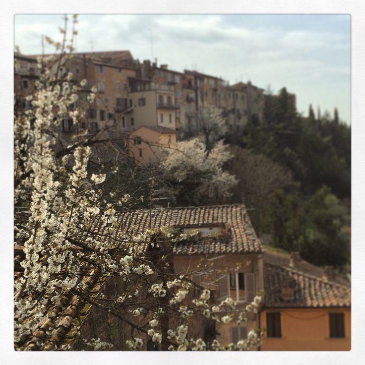 #Perugia #spring