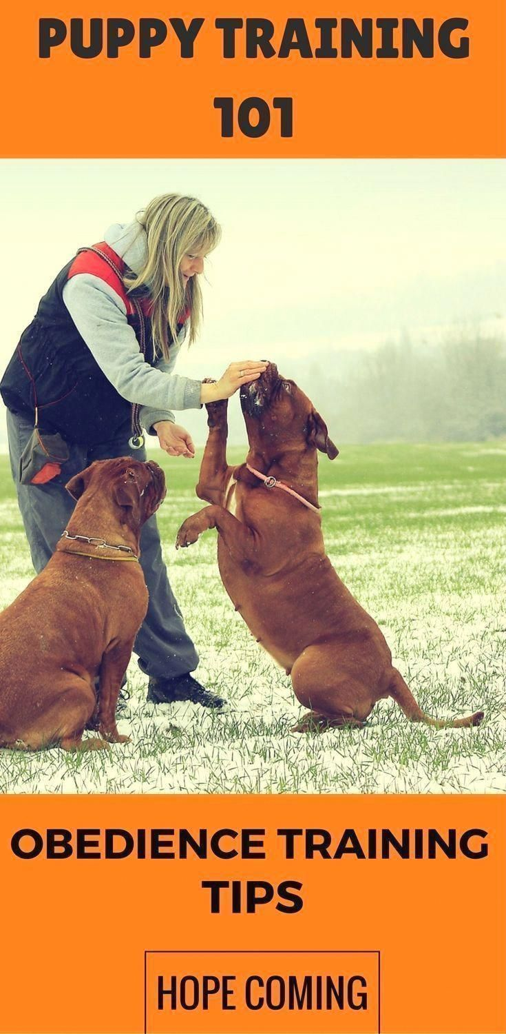Command For Dog Training One Great Way To Get Your Pet Dog Exercise Is By Going On A Run From It Your Puppy Wi Puppy Training Tips Basic Dog Training Dog