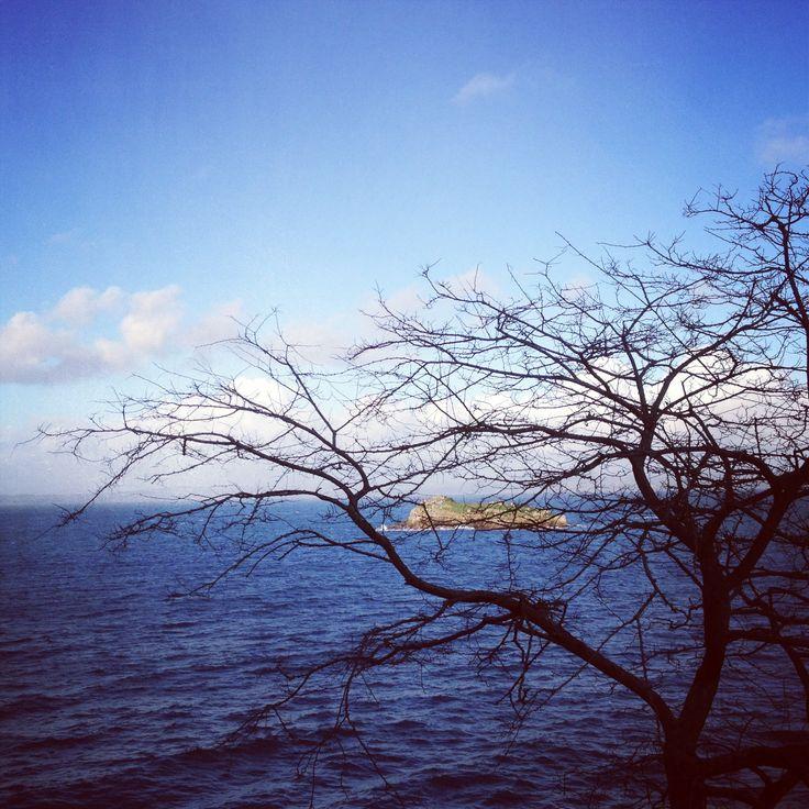 Tree on the sea.